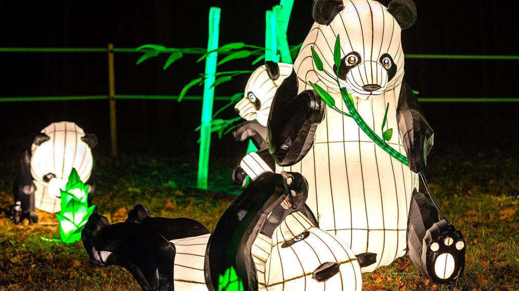 Chiński Festiwal Światła - oczywiście spotkamy tu również chińskie pandy.