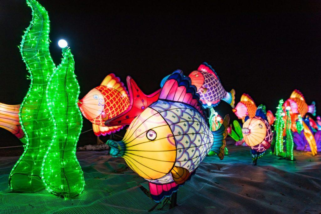 Chiński Festiwal Światła - piękne, świetlne ryby.