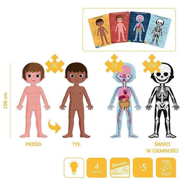 Puzzle ciało człowieka to 4 różne układanki w jednym pudełku.