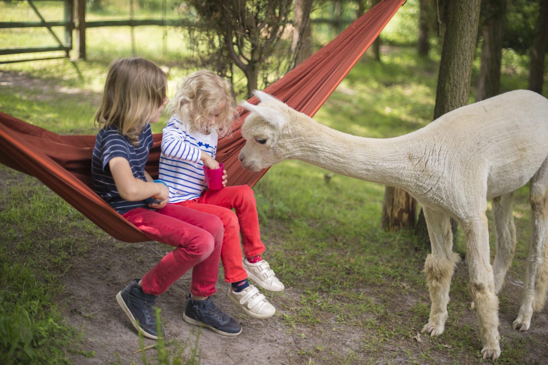 Projekt Alpaka – pomysł na świetny, rodzinny weekend